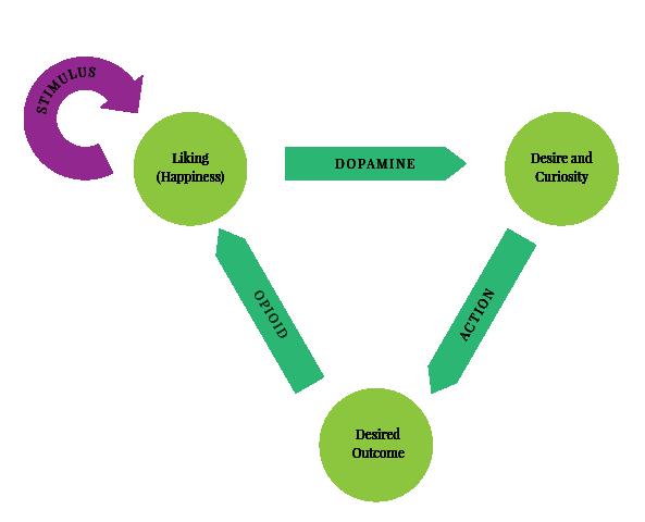 dopamine-cycle